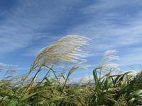 秋分の日に、秋の空。 - タビノイロドリ