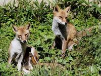 9月の天気のよい動物園 - 動物園放浪記