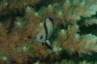 19.9.24浮原島周辺で - 沖縄本島 島んちゅガイドの『ダイビング日誌』