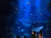 幻想的な夜の京都水族館  *夏休み京都鉄道旅⑥* - 子どもと暮らしと鉄道と