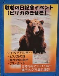 ピリカのきせき① - 徒然日記