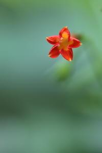 野辺の草花 - ecocoro日和