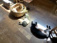 猫一直線 - りきの毎日