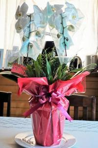 ■お誕生日プレゼント【アメリカ東海岸在住の二女から胡蝶蘭/オンシジュウムの寄せ植えが届きました♪豪華絢爛!!】 - 「料理と趣味の部屋」