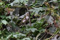 センダイムシクイ&エナガ&季節の花 - 鳥と共に日々是好日