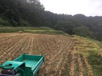 R元年稲刈り - みつひろの徒然ブログ