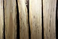 スポルテッド橅(ブナ) - SOLiD「無垢材セレクトカタログ」/ 材木店・製材所 新発田屋(シバタヤ)