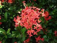 沖縄の植物Ⅱ - 飛騨山脈の自然