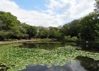 散歩2019.9.25せせらぎ公園のヒガンバナ - Gonta2019's Blog