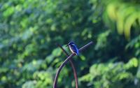 鳥さんと朝散歩♪ - 今日もカメラを手に・・・♪ part2