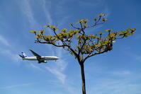 芽吹く - 南の島の飛行機日記