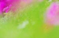今日のふわラー #421 - ainosatoブログ02