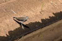 お尻フリフリ - 綺麗な野鳥たち