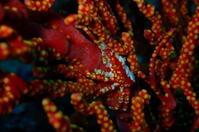 19.9.26海、凪いだ! - 沖縄本島 島んちゅガイドの『ダイビング日誌』