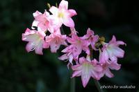 川口市の興禅院で出会っためずらしい花々(^^♪ - 自然のキャンバス