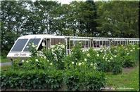 ダリアの季節(百合が原公園) - 北海道photo一撮り旅