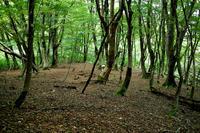 初秋の森 - 朽木小川より 「itiのデジカメ日記」 高島市の奥山・針畑からフォトエッセイ