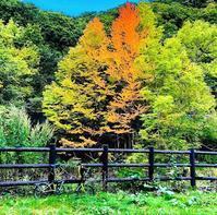 BROミーティング北海道開催地は滝野すずらん公園に決定! - ShugakusoCycle(秀岳荘自転車)