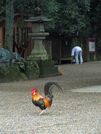 秋の奈良を散歩しました。(1)石上神宮 - ご無沙汰写真館