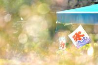 秋風 - お花びより