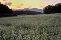 蕎麦畑 1奈良県 - ty4834 四季の写真Ⅱ