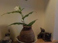 白花のホトトギス(No.98) - 薪窯冬青犬器