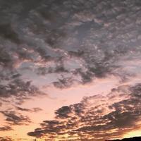 定点観察!??「ひつじ雲???かな。天気崩れるな・・・」編 - ドライフラワーギャラリー⁂ふくことカフェ