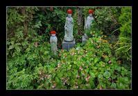 寺の秋海棠 - Desire