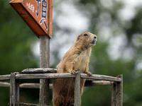 頂 - 動物園放浪記