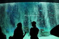 サンシャイン水族館の大水槽の前は小さい子でいっぱいでした(^^♪ - 自然のキャンバス