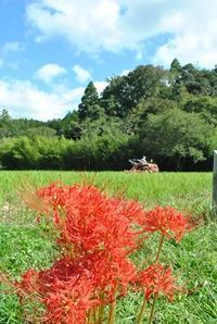 来年の田植え準備はじまる - 千葉県いすみ環境と文化のさとセンター