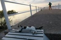 解決エキサイト新着非表示問題と夕べの湖畔のこんにちは猫 - イタリア写真草子 Fotoblog da Perugia