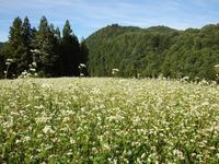 『高原の蕎麦畑』 - 自然風の自然風だより