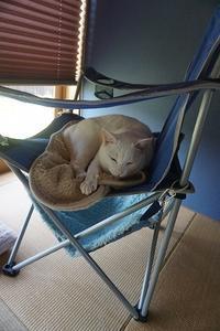 微睡むのんちゃん、おめでとう! - 雑記帳~信州の東のほうで。