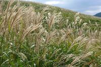 仙石原のすすき草原に行ってきました - エーデルワイスPhoto