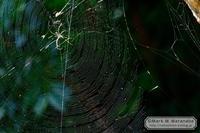 蜘蛛の巣を愉しむ - Mark.M.Watanabeの熊本撮影紀行