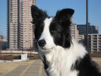訃報 - 犬とお散歩