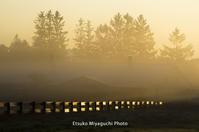牧場に朝が来た - ekkoの --- four seasons --- 北海道