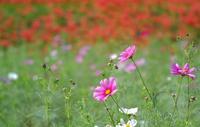 初秋の花々 - feel a season