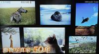 動物写真家50年 - 土竜のトンネル