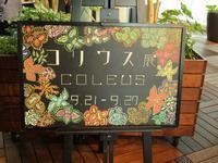 『コリウス展(フラワーパーク江南)』 - 自然風の自然風だより