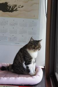 今日のはぁちゃん【窓辺に戻る】 - 森小日記(もりしょうにっき)