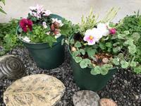 春一番に咲く球根の寄せ植え作りご案内♪ - Bleu Belle Fleur☆ブルーベルフルール