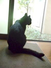 黒猫パトの仕返し - スズキヨシカズ幻燈画室
