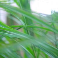 庭は野草と共に秋色 - Miemie  Art. ***ココロの景色***