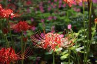 葛飾区宝蔵寺の彼岸花も美しく! - 一場の写真 / 足立区リフォーム館・頑張る会社ブログ