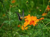 蝶と蜂の食事中。 - 写真で楽しんでます! スマホ画像!