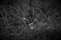 草むらで咲く - フォトな日々
