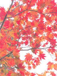 神仙沼の紅葉♪ - 笑う門には福来たる