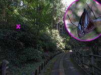 アサギマダラのねぐら - 秩父の蝶